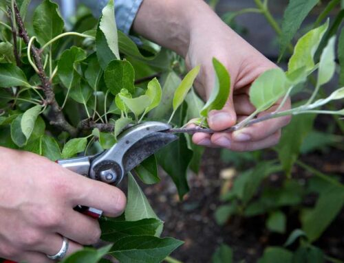 Pruning and Shaping our Lives to Bear Fruit